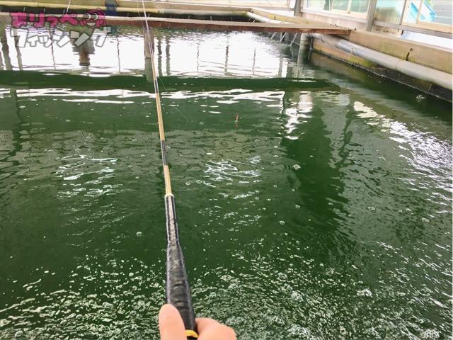 金魚 釣り堀