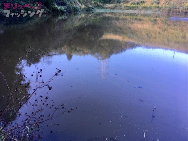 野池バス釣り