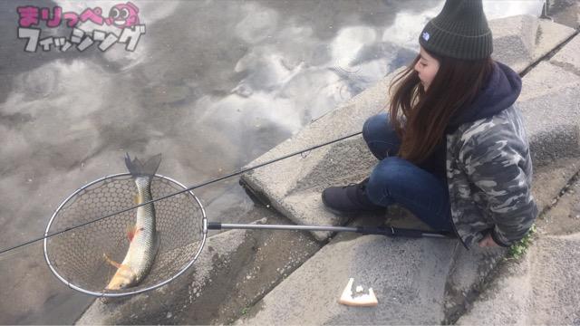パン鯉釣り