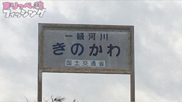 紀ノ川 シーバス